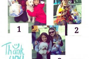 Ganhadores do Cãocurso 2016